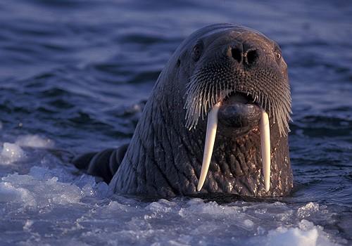 Magnifiques images de l'antarctique - Sa population, ses paysages ! 2