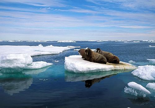 Magnifiques images de l'antarctique - Sa population, ses paysages ! 11