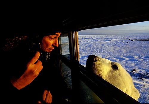 Magnifiques images de l'antarctique - Sa population, ses paysages ! 19