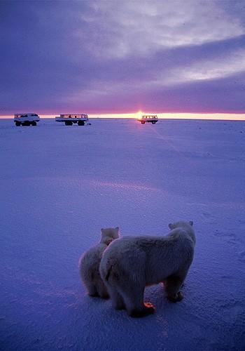 Magnifiques images de l'antarctique - Sa population, ses paysages ! 20