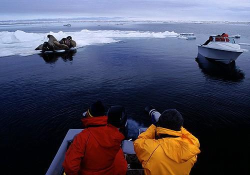 Magnifiques images de l'antarctique - Sa population, ses paysages ! 21