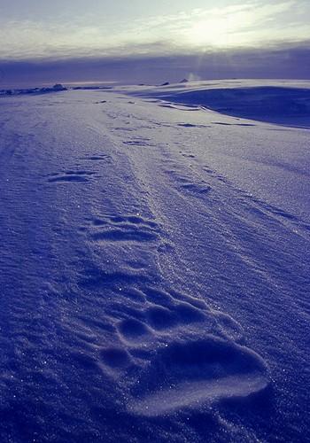 Magnifiques images de l'antarctique - Sa population, ses paysages ! 22