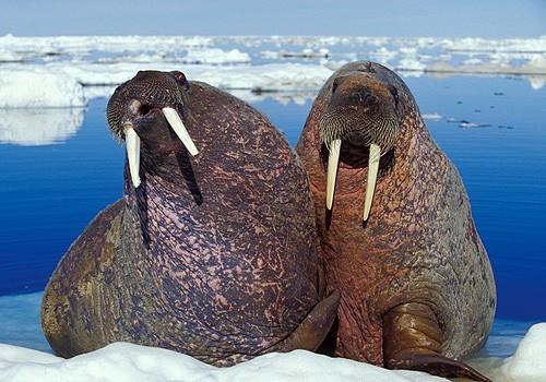 Magnifiques images de l'antarctique - Sa population, ses paysages ! 23