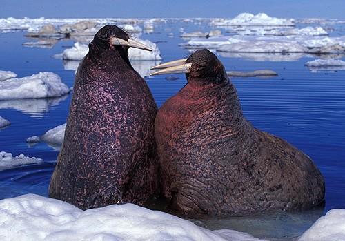 Magnifiques images de l'antarctique - Sa population, ses paysages ! 24