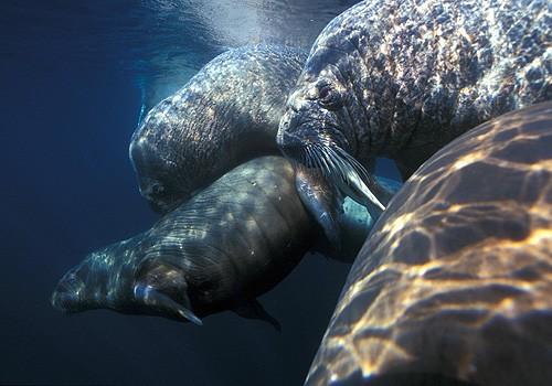 Magnifiques images de l'antarctique - Sa population, ses paysages ! 25