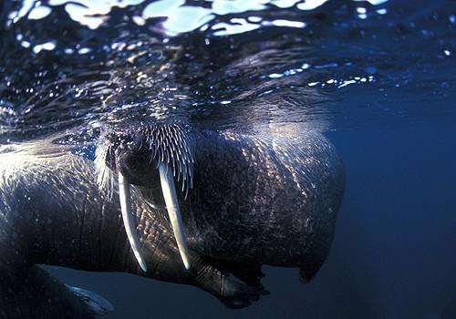 Magnifiques images de l'antarctique - Sa population, ses paysages ! 26