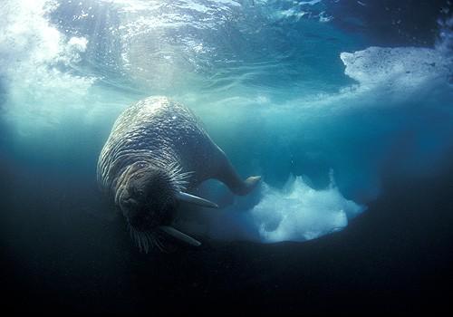 Magnifiques images de l'antarctique - Sa population, ses paysages ! 29