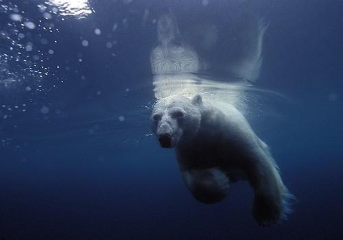 Magnifiques images de l'antarctique - Sa population, ses paysages ! 37