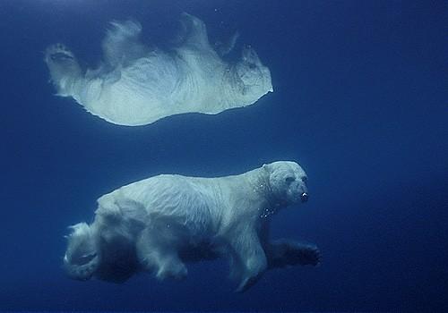 Magnifiques images de l'antarctique - Sa population, ses paysages ! 38