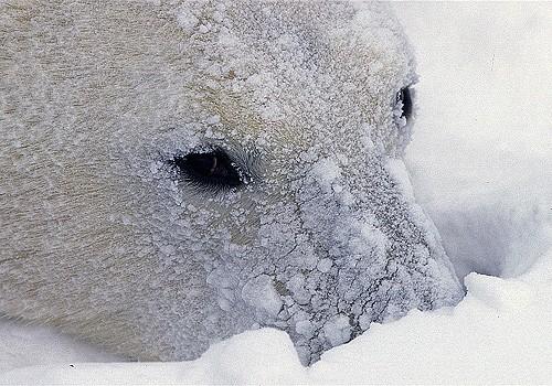 Magnifiques images de l'antarctique - Sa population, ses paysages ! 40