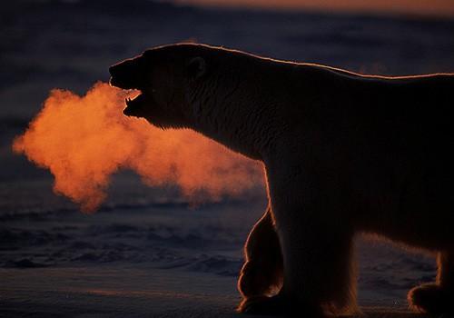 Magnifiques images de l'antarctique - Sa population, ses paysages ! 46