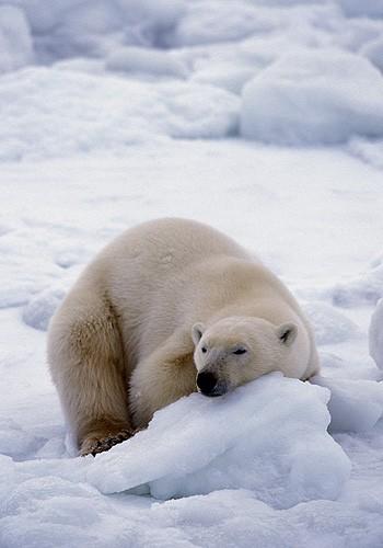 Magnifiques images de l'antarctique - Sa population, ses paysages ! 47