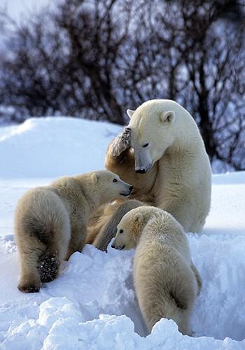 Magnifiques images de l'antarctique - Sa population, ses paysages ! 48