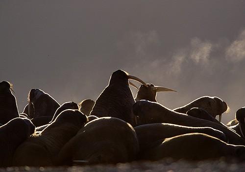 Magnifiques images de l'antarctique - Sa population, ses paysages ! 50
