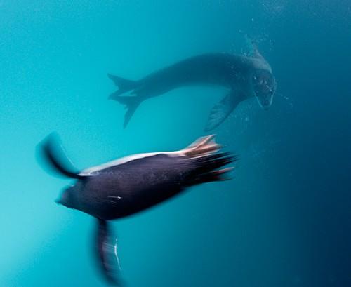 Magnifiques images de l'antarctique - Sa population, ses paysages ! 60