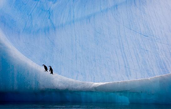 Magnifiques images de l'antarctique - Sa population, ses paysages ! 63