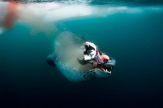 Magnifiques images de l'antarctique - Sa population, ses paysages ! 65