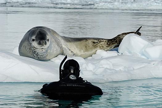 Magnifiques images de l'antarctique - Sa population, ses paysages ! 69