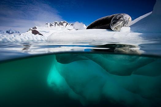 Magnifiques images de l'antarctique - Sa population, ses paysages ! 70