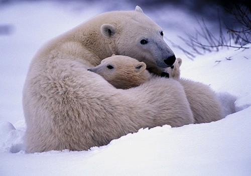 Magnifiques images de l'antarctique - Sa population, ses paysages ! 73