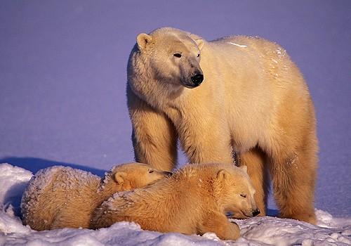 Magnifiques images de l'antarctique - Sa population, ses paysages ! 74
