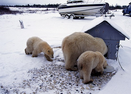 Magnifiques images de l'antarctique - Sa population, ses paysages ! 75