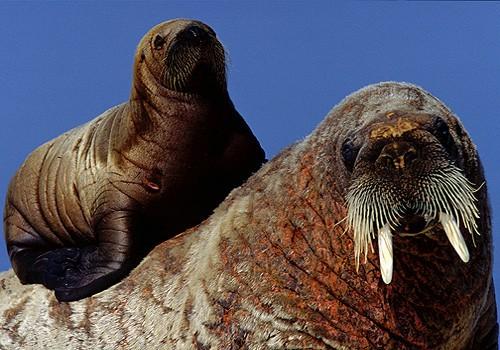 Magnifiques images de l'antarctique - Sa population, ses paysages ! 77