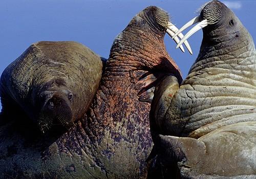 Magnifiques images de l'antarctique - Sa population, ses paysages ! 79