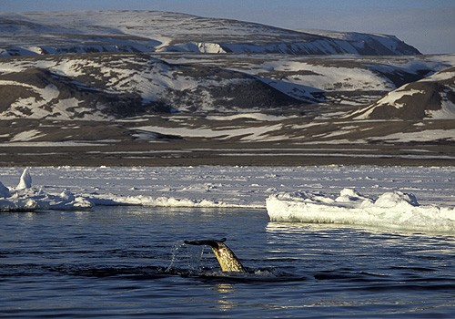 Magnifiques images de l'antarctique - Sa population, ses paysages ! 80