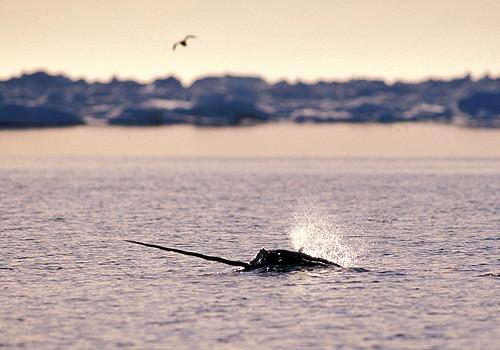 Magnifiques images de l'antarctique - Sa population, ses paysages ! 82