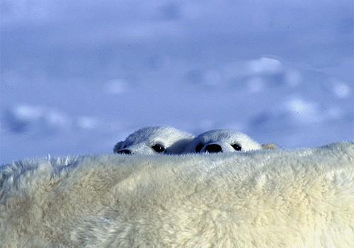 Magnifiques images de l'antarctique - Sa population, ses paysages ! 89