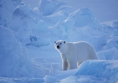 Magnifiques images de l'antarctique - Sa population, ses paysages ! 91
