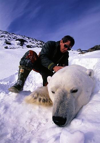 Magnifiques images de l'antarctique - Sa population, ses paysages ! 93