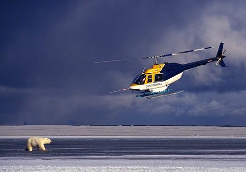 Magnifiques images de l'antarctique - Sa population, ses paysages ! 94