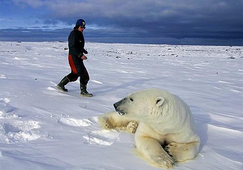 Magnifiques images de l'antarctique - Sa population, ses paysages ! 95