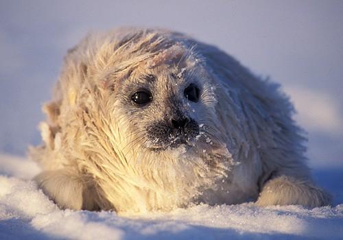 Magnifiques images de l'antarctique - Sa population, ses paysages ! 97