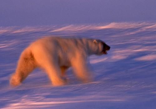 Magnifiques images de l'antarctique - Sa population, ses paysages ! 98