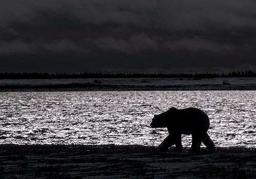 Magnifiques images de l'antarctique - Sa population, ses paysages ! 102