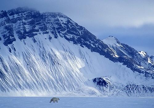 Magnifiques images de l'antarctique - Sa population, ses paysages ! 103