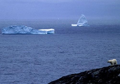 Magnifiques images de l'antarctique - Sa population, ses paysages ! 105