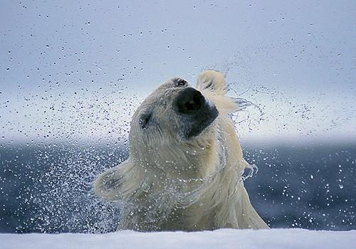 Magnifiques images de l'antarctique - Sa population, ses paysages ! 106