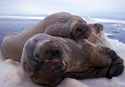 Magnifiques images de l'antarctique - Sa population, ses paysages ! 107