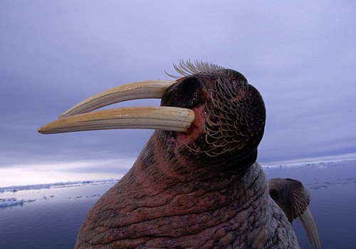 Magnifiques images de l'antarctique - Sa population, ses paysages ! 108