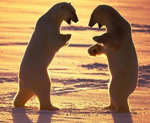 Magnifiques images de l'antarctique - Sa population, ses paysages ! 113