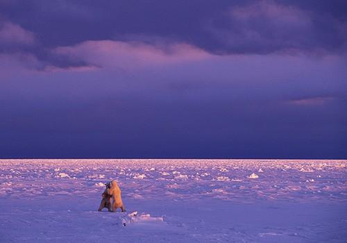 Magnifiques images de l'antarctique - Sa population, ses paysages ! 114