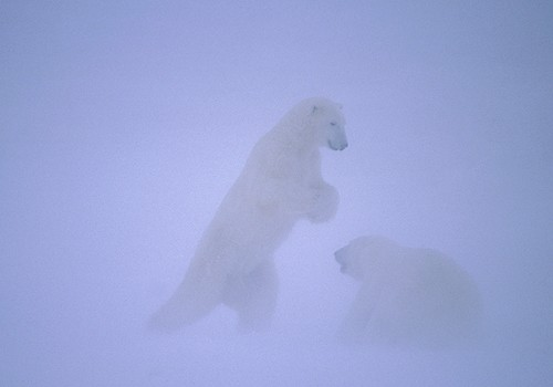 Magnifiques images de l'antarctique - Sa population, ses paysages ! 115