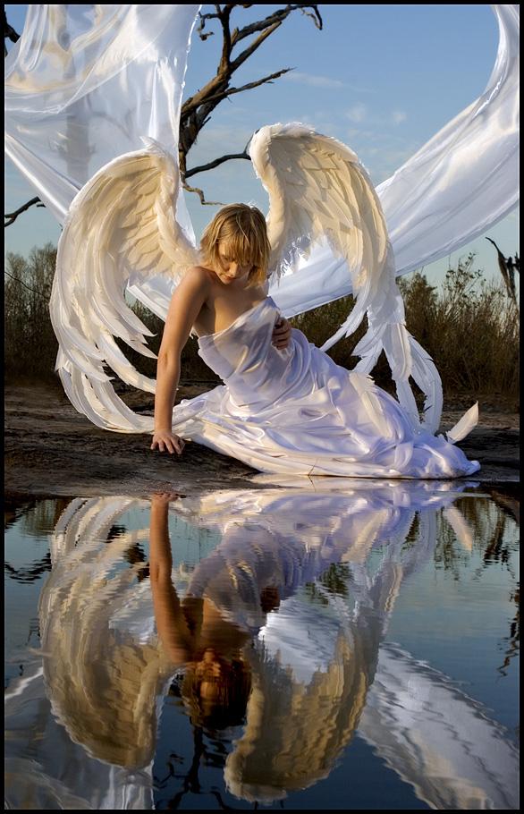 de très belles images... Angel2